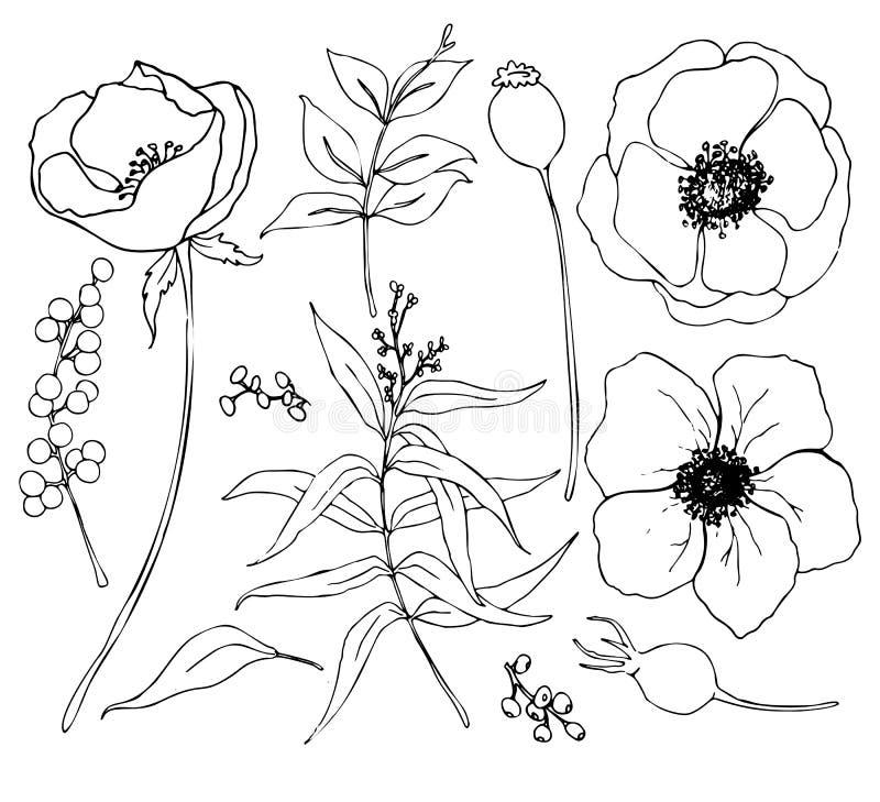Διανυσματική συλλογή συρμένων των χέρι εγκαταστάσεων με τον ευκάλυπτο και το anemone Βοτανικό σύνολο λουλουδιών και κλάδων σκίτσω απεικόνιση αποθεμάτων