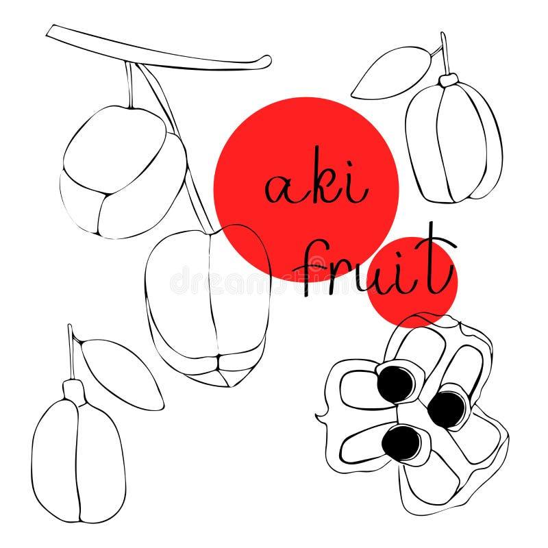 Διανυσματική συρμένη χέρι τέχνη των εξωτικών φρούτων - aki Το Aki είναι επικίνδυνα εξωτικά φρούτα, τα εθνικά φρούτα της Τζαμάικας απεικόνιση αποθεμάτων