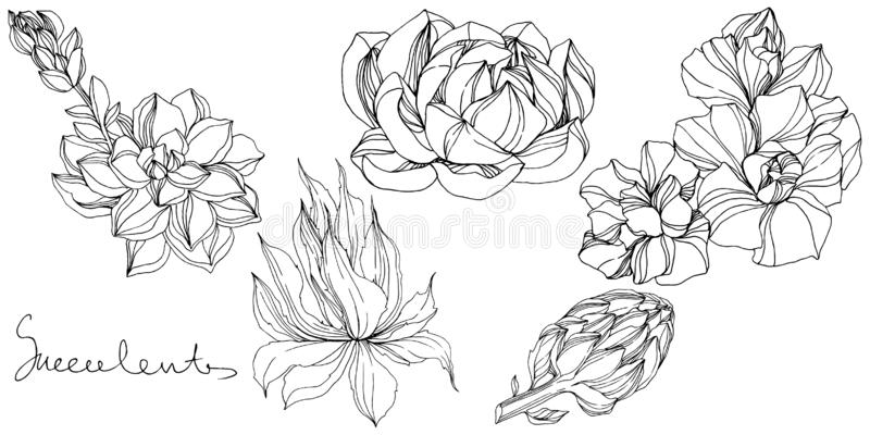 Διανυσματικό βοτανικό succulent λουλούδι ζουγκλών Γραπτή χαραγμένη τέχνη μελανιού Απομονωμένο succulents στοιχείο απεικόνισης διανυσματική απεικόνιση
