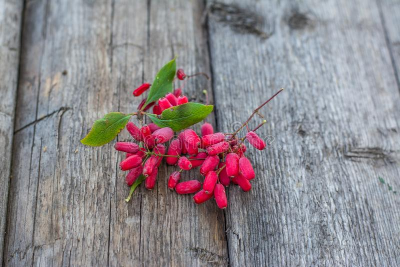Δροσιά στα μούρα άγριο barberry στον ξύλινο πίνακα Μούρα στη χλόη Πράσινη χλόη άγρια περιοχές μούρων Πιάτο Δημοκρατίας του Ουζμπε στοκ εικόνα