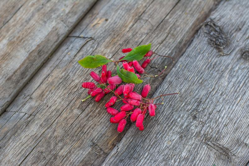 Δροσιά στα μούρα άγριο barberry στον ξύλινο πίνακα Μούρα στη χλόη Πράσινη χλόη άγρια περιοχές μούρων Πιάτο Δημοκρατίας του Ουζμπε στοκ φωτογραφία με δικαίωμα ελεύθερης χρήσης