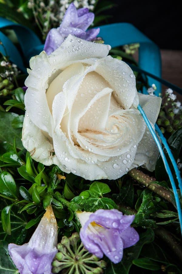 Δροσοσκέπαστο λουλούδι των τριαντάφυλλων στοκ εικόνες