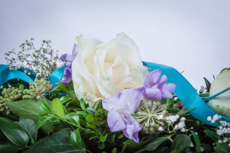 Δροσοσκέπαστο λουλούδι των τριαντάφυλλων στοκ εικόνα με δικαίωμα ελεύθερης χρήσης