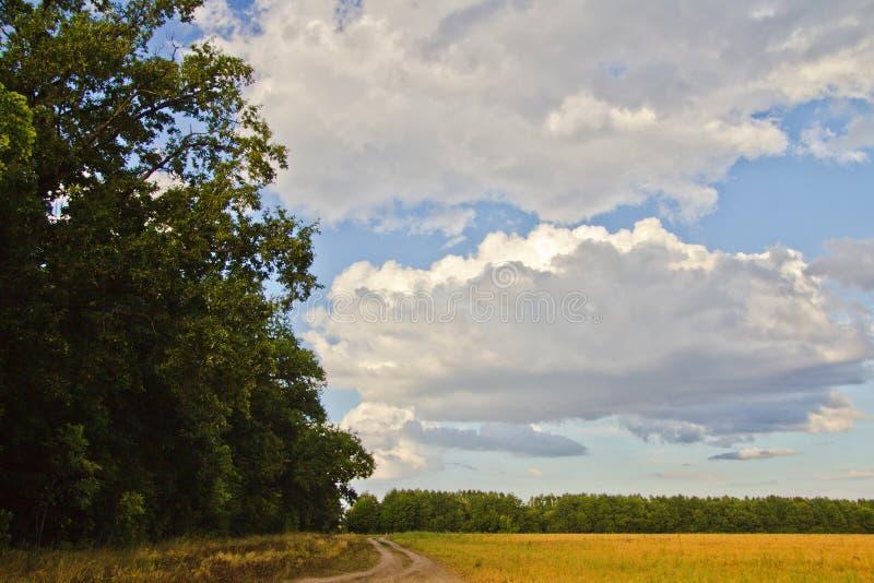 Δρόμος τομέων μεταξύ εγκαταστάσεων δέντρων και ενός τομέα στοκ εικόνες