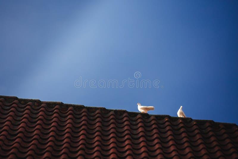 Δύο άσπρα περιστέρια στη στέγη του σπιτιού με το μπλε ουρανό Άποψη από μακρυά στοκ εικόνες
