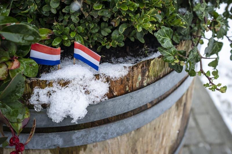 Δύο μικρές σημαίες των Κάτω Χωρών τίθενται στο χιόνι, σε ένα παλαιό ξύλινο βαρέλι με τις πράσινες εγκαταστάσεις στοκ φωτογραφίες με δικαίωμα ελεύθερης χρήσης