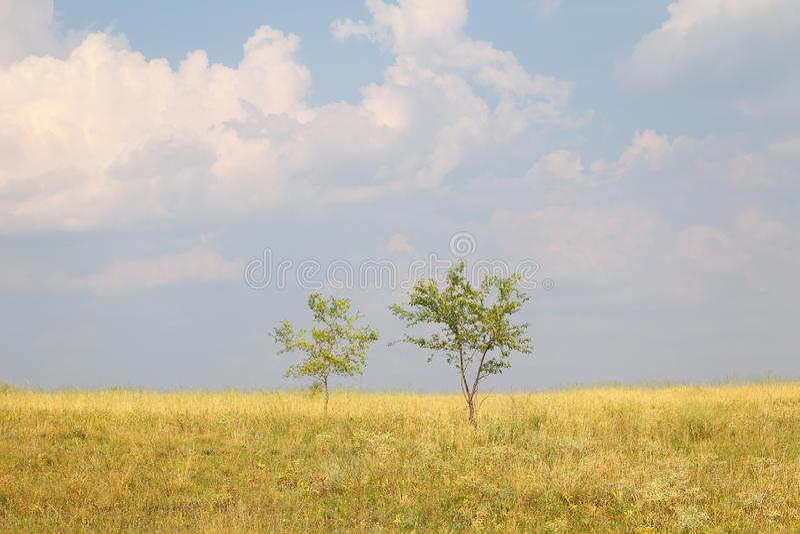 Δύο δέντρα σε έναν μεγάλο τομέα ενάντια σε έναν μπλε ουρανό και τα σύννεφα στοκ εικόνα