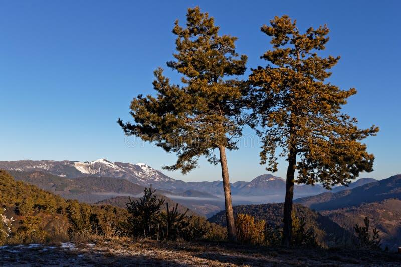 Δύο δέντρα στο συνταγματάρχη de Pre-Guitard στοκ φωτογραφίες με δικαίωμα ελεύθερης χρήσης