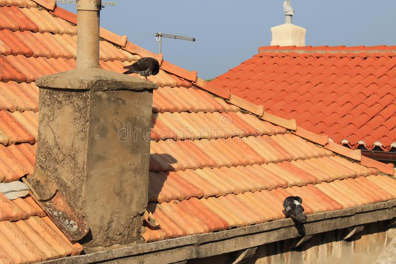 Δύο περιστέρια σε μια παλαιά κεραμωμένη στέγη στοκ εικόνες με δικαίωμα ελεύθερης χρήσης