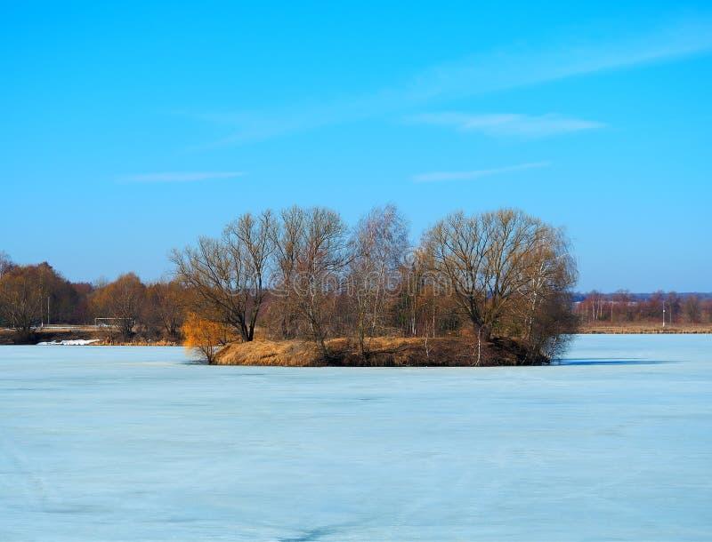 Île avec les arbres nus entourés par le fond gelé de glace image libre de droits