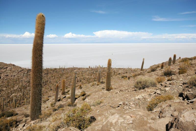 Île d'Incahuasi au milieu des appartements de sel d'Uyuni photo libre de droits
