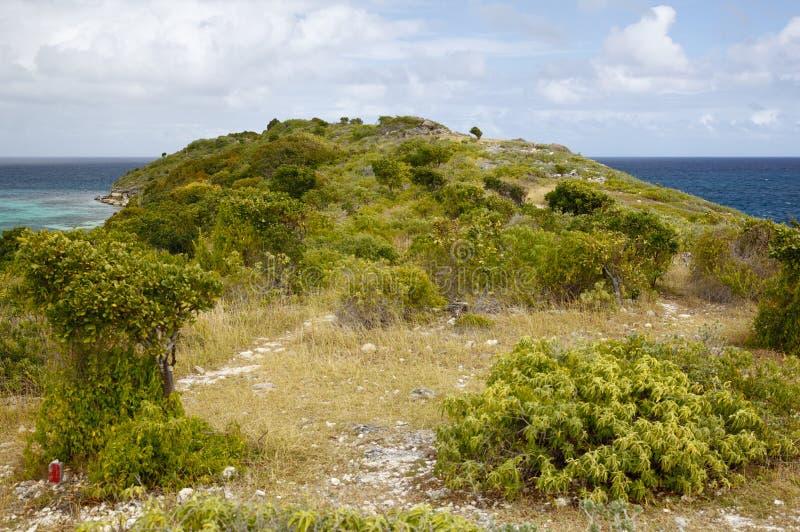 Île d'oiseau, Antigua image libre de droits