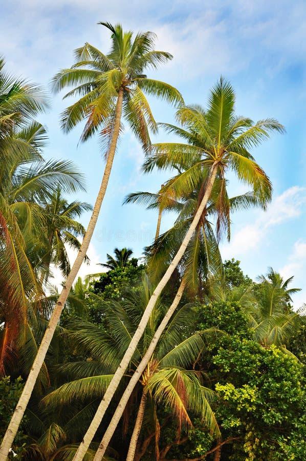 Île de Boracay, Philippines photographie stock libre de droits