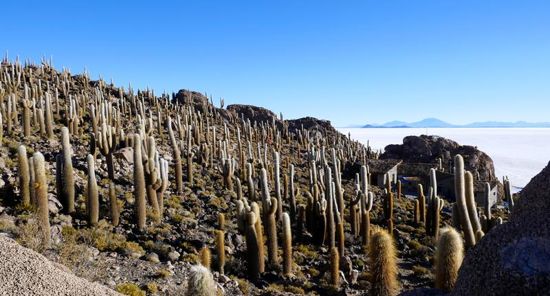 Île de cactus, Salar de Uyuni, Altiplano, Bolivie photo libre de droits