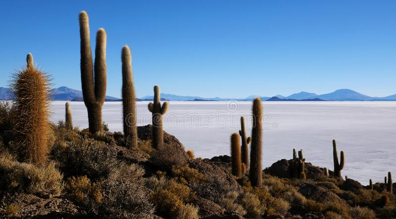 Île de cactus, Salar de Uyuni, Altiplano, Bolivie photos stock