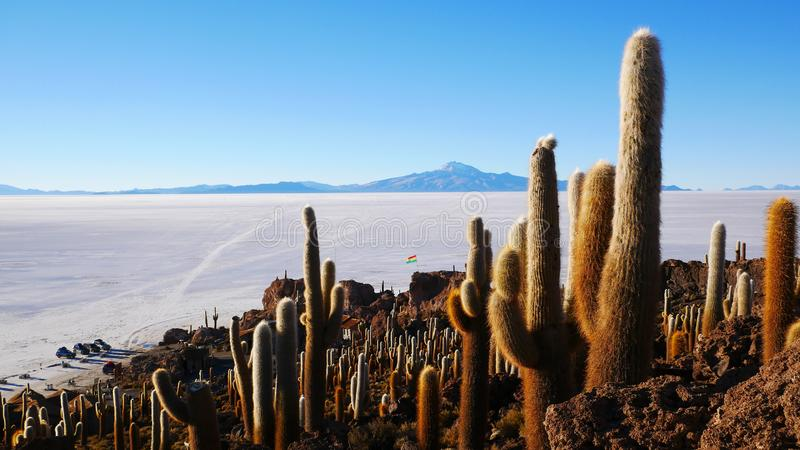 Île de cactus, Salar de Uyuni, Altiplano, Bolivie image stock