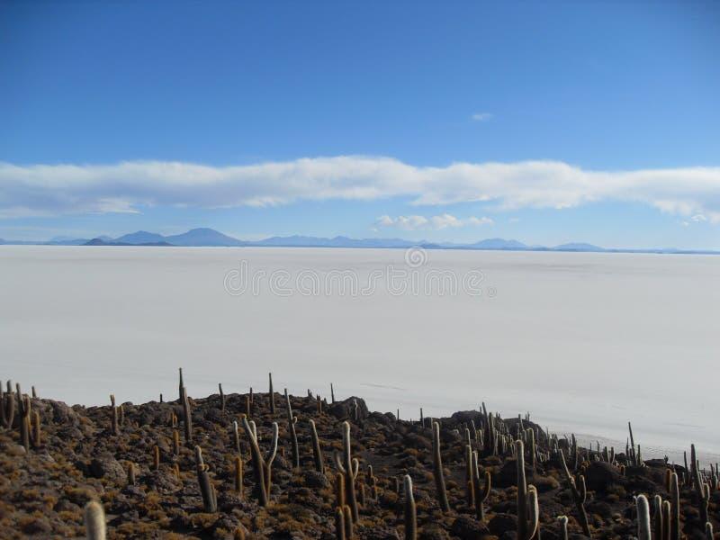 Île de cactus sur les appartements de sel, Bolivie images stock