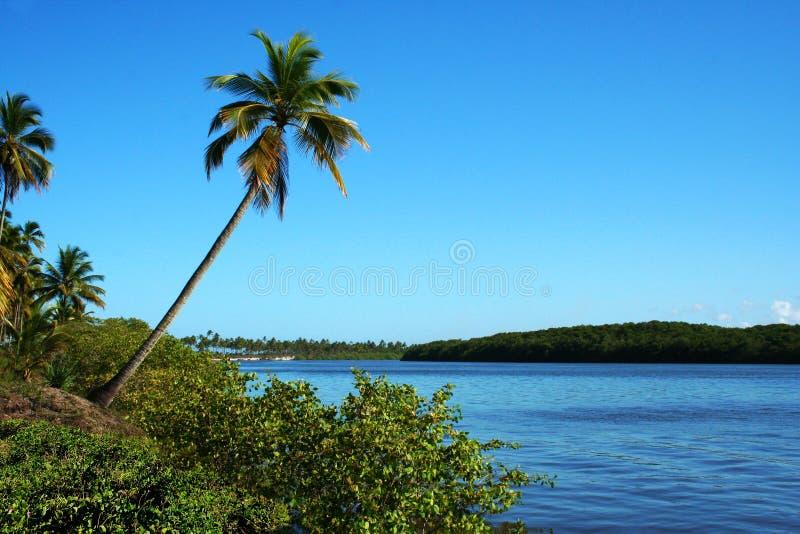 Île de Comandatuba image stock