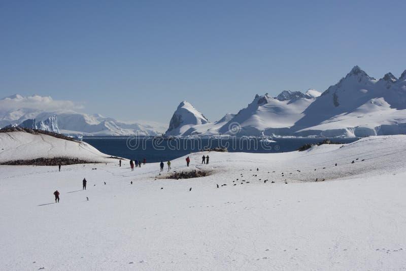 île de cuverville de l'Antarctique image libre de droits