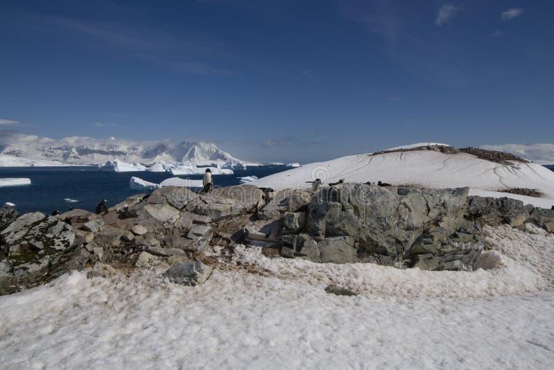 île de cuverville de l'Antarctique image stock