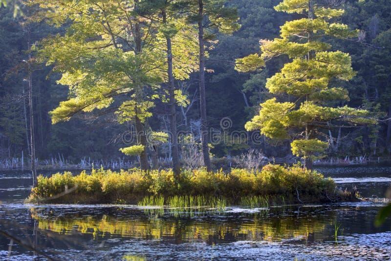 Île de feuillage d'automne dans l'étang casse-cou, le Connecticut photographie stock libre de droits