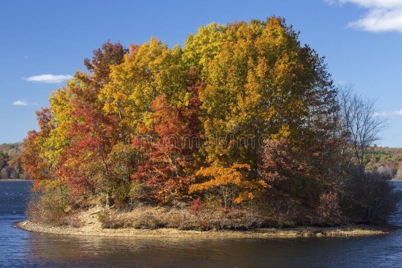 Île de feuillage d'automne vibrant cavité dans lac, Mansfield, Connec photographie stock