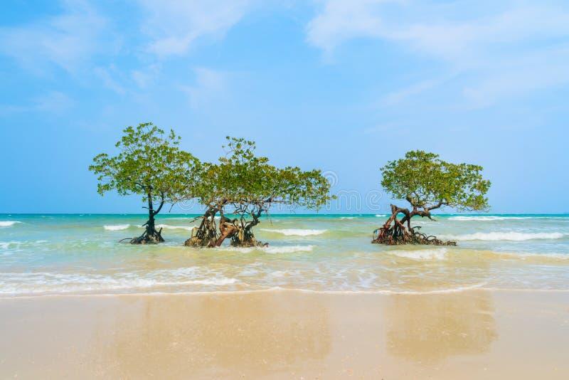 Île de Havelock sur des îles d'Andaman et de Nicobar photo libre de droits