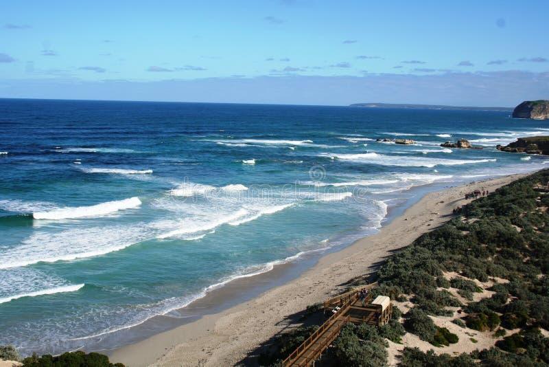 Île de kangourou photos libres de droits
