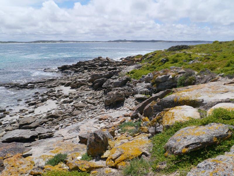 Île de kangourou dans l'Australie photographie stock