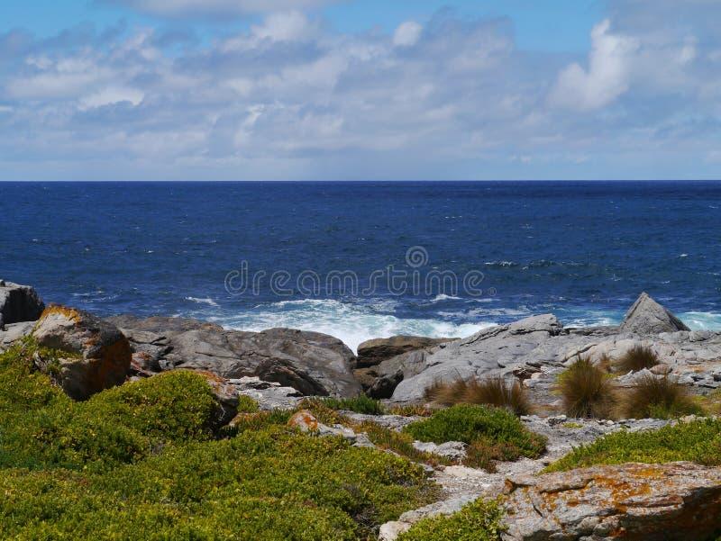 Île de kangourou dans l'Australie photographie stock libre de droits