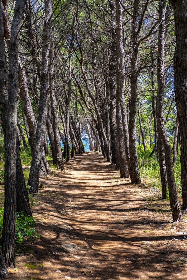 Île de Korcula, Dalmatie Croatie photographie stock libre de droits