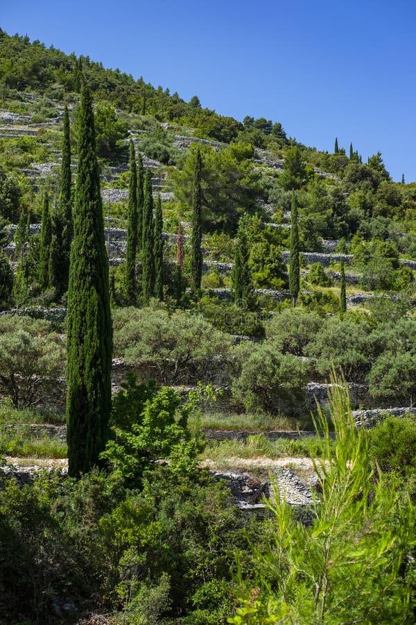 Île de Korcula, Dalmatie Croatie images libres de droits