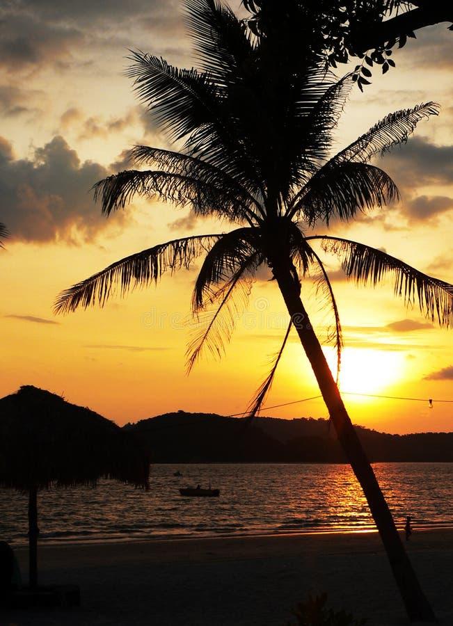 Île de Langkawi. Coucher du soleil incliné de palmier photos libres de droits