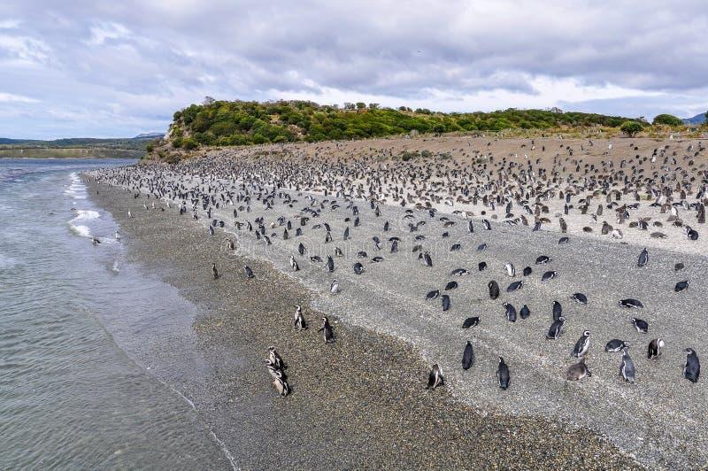 Île de pingouin, la Manche de briquet, Argentine photo stock