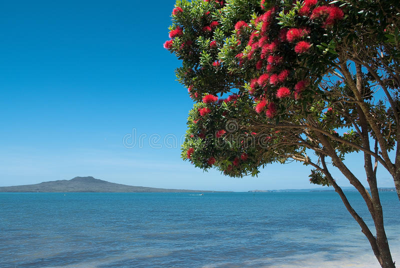Île de Rangitoto avec l'arbre de pohutukawa en fleur photos stock