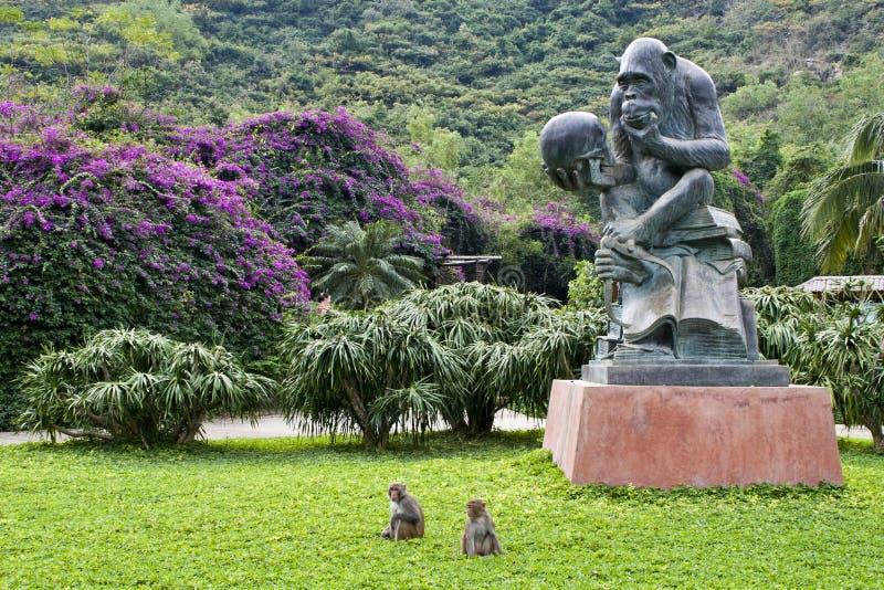 Île de singe de Nanwan photos libres de droits