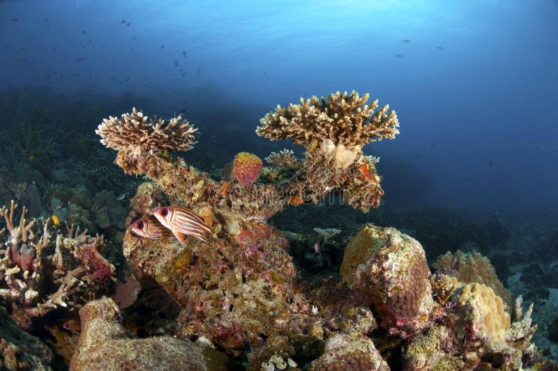 Île de Tioman photos stock