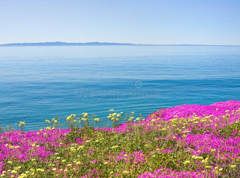 Île et fleurs photographie stock