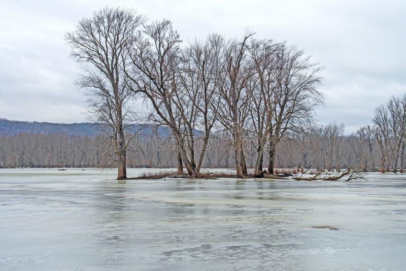 Île isolée dans un bayou congelé photographie stock