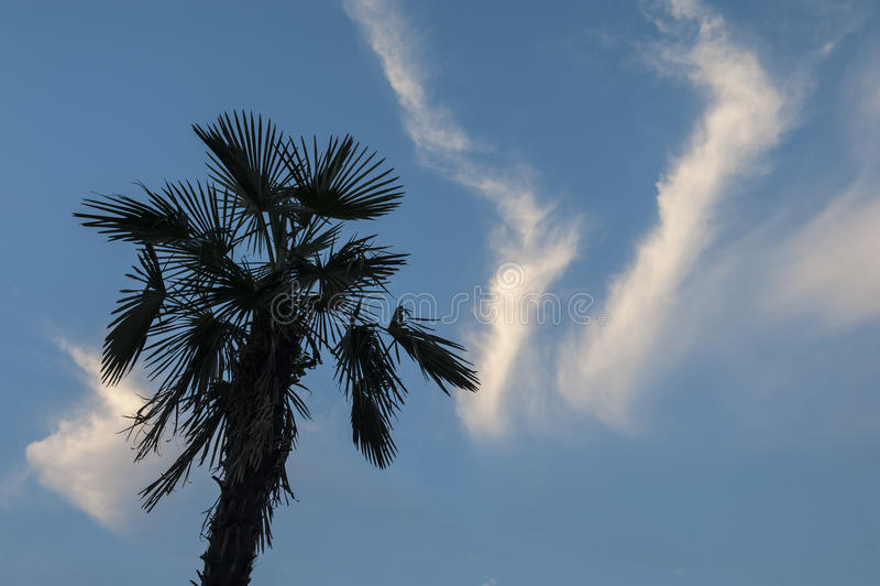 Île méditerranéenne rentrée par photographie Corse photo libre de droits