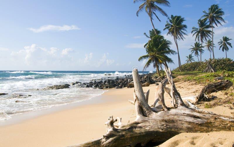 Île peu développée de maïs de plage image libre de droits