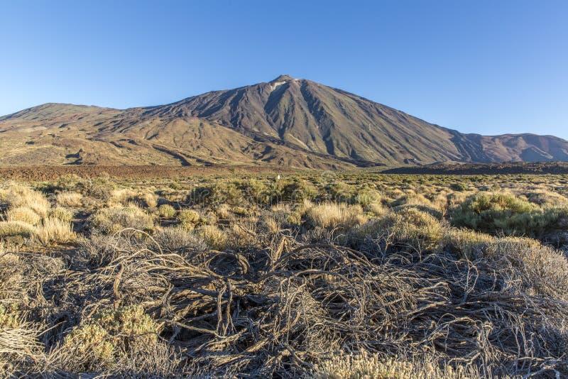 Îles Canaries, Ténérife Parque Nacional Del Teide photo stock