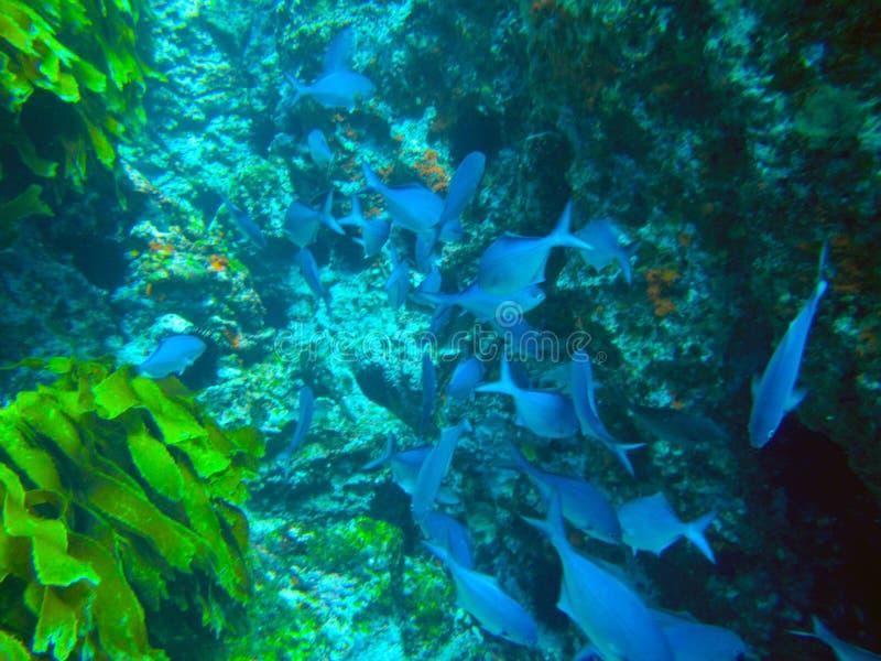 Îles Marine Reserve de chevaliers de pauvres sous-marine photo libre de droits