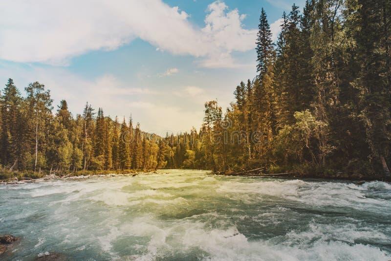 Ρεύμα βουνών με τα ορμητικά σημεία ποταμού στο πράσινο δάσος στο χρόνο άνοιξη εικόνα που τονίζεται Ροές ποταμών βουνών στη δασική στοκ εικόνες με δικαίωμα ελεύθερης χρήσης