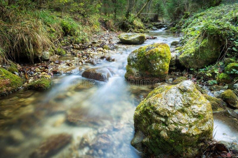 Ρεύμα σε ένα δάσος του εθνικού πάρκου Mala Fatra στοκ φωτογραφίες