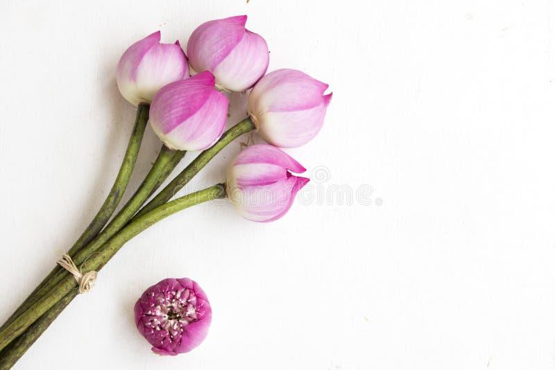 Ρόδινα λουλούδια λωτού τοπικά της διακόσμησης της Ασίας στο λευκό στοκ εικόνες