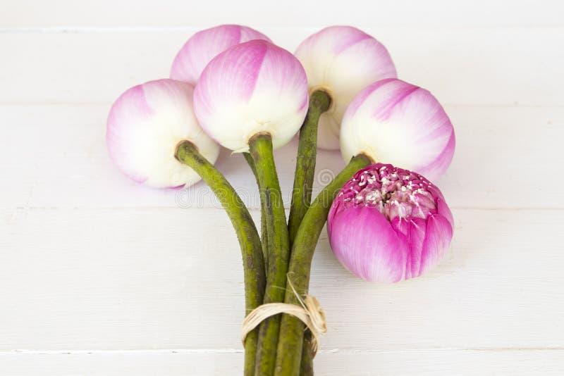 Ρόδινα λουλούδια λωτού τοπικά της διακόσμησης της Ασίας στο λευκό στοκ φωτογραφία