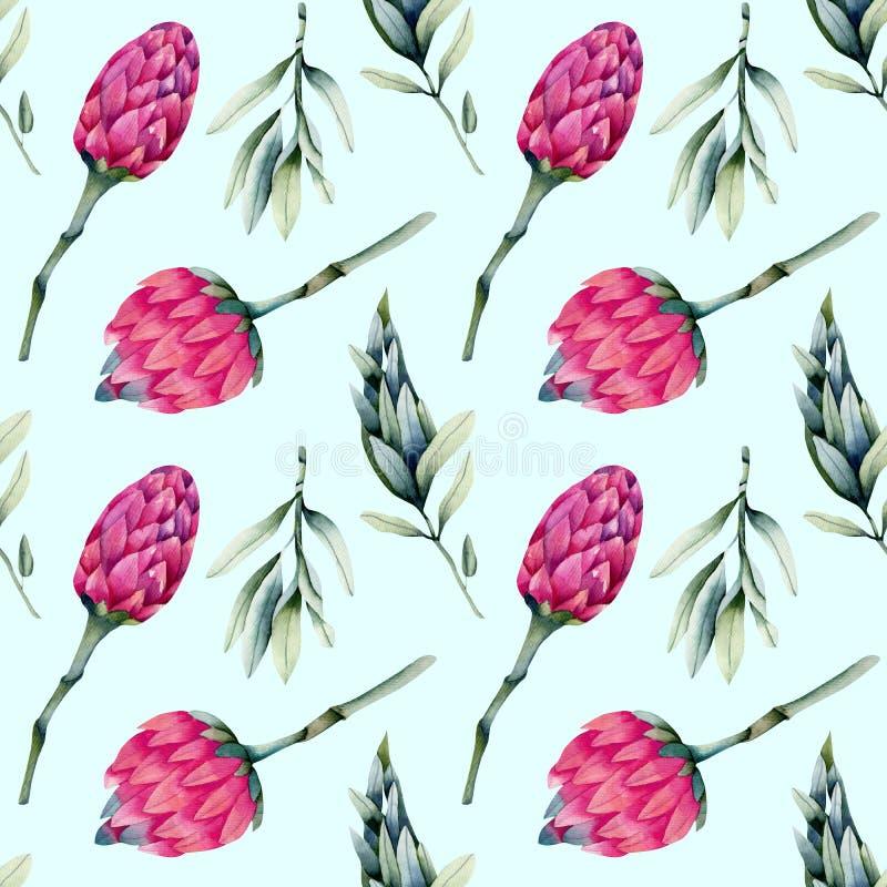 Ρόδινα λουλούδια protea Watercolor, πράσινο άνευ ραφής σχέδιο κλάδων διανυσματική απεικόνιση