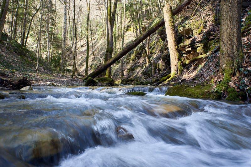 Ρωγμές σε έναν ποταμό βουνών που περνά το δάσος και τους λίθους με το πράσινο βρύο στοκ φωτογραφία με δικαίωμα ελεύθερης χρήσης