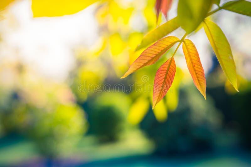 Όμορφα ζωηρόχρωμα φύλλα, εποχιακό υπόβαθρο φύσης στοκ φωτογραφία με δικαίωμα ελεύθερης χρήσης